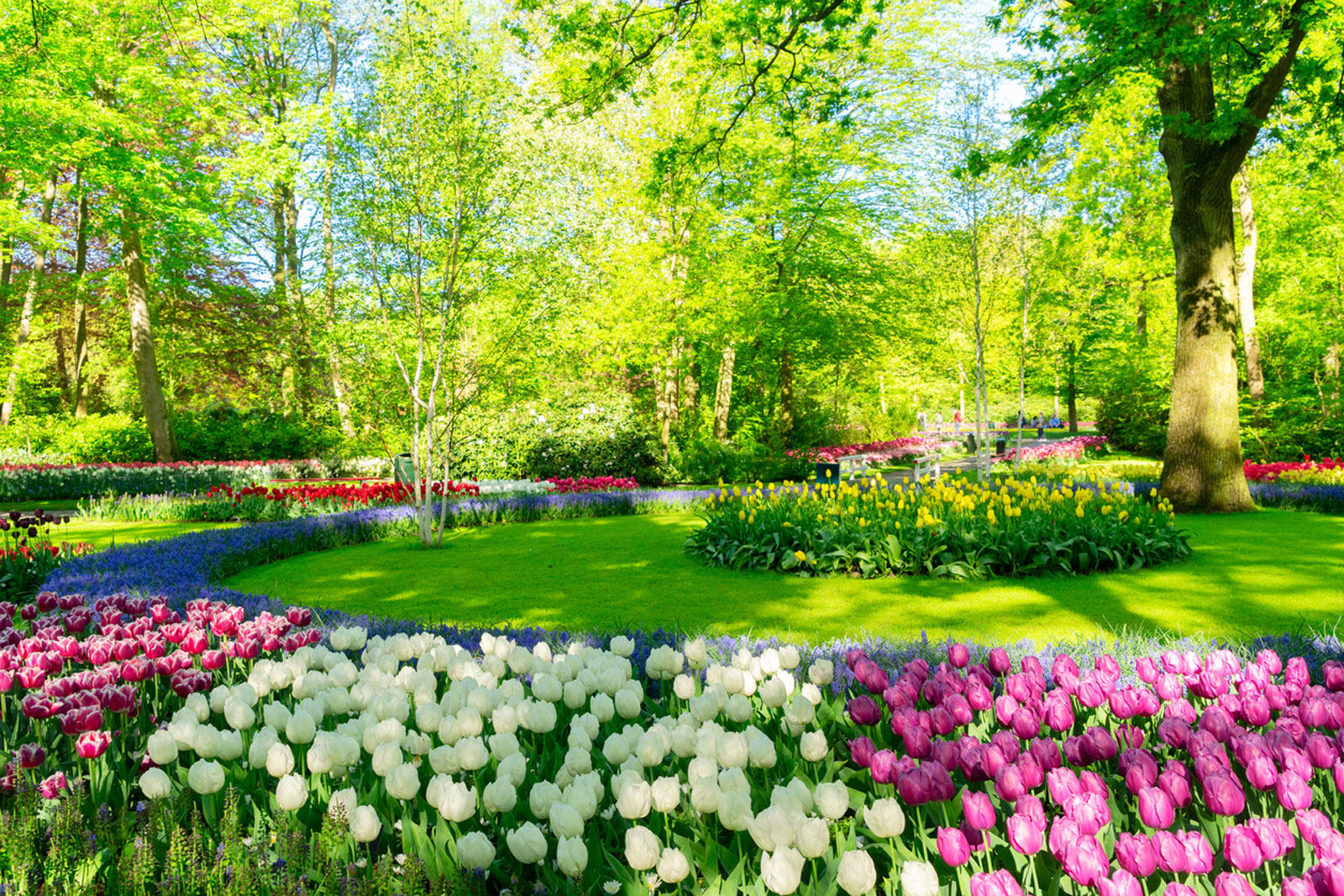 Different Kinds Of Flower Beds Learn About Popular Flower Bed