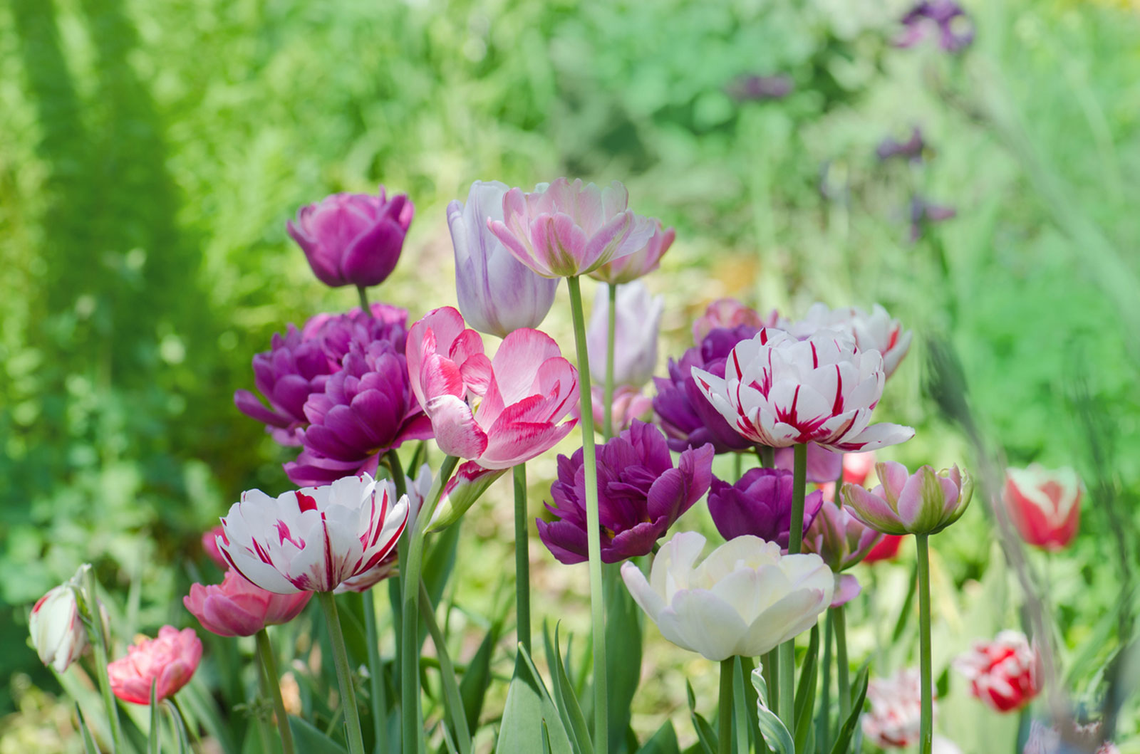 Planting Spring Flowers Cold Weather Flowers Bulbs For Your Garden