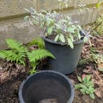 What Is A Pot In Pot Garden Learn About Burying Pots In The Garden