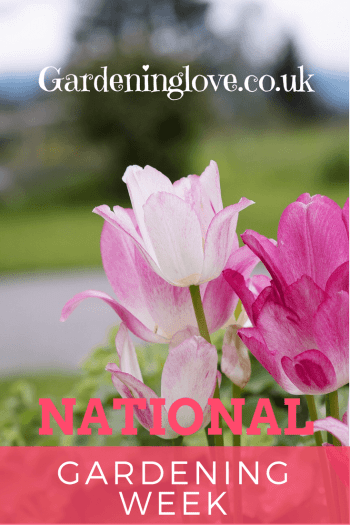 Pink flowers with a green field . National gardening week is written over the flowers