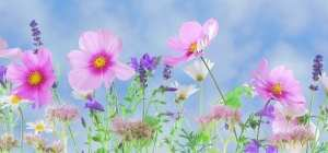 Wild flowers of pinks, whites and purple colours with a blue sky behind. http://www.gardeninglove.co.uk/gardening- personality-whats-yours