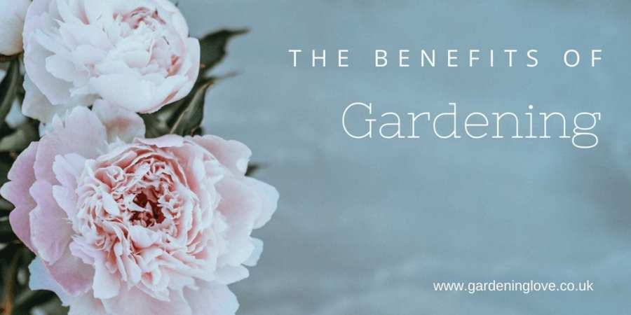 5 ways gardening is underrated. Discover the gardening benefits for mind, body and soul #gardening #gardener #gardenforhealth #ecotherapy