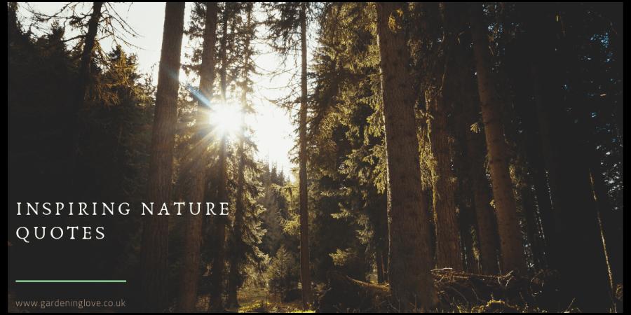 inspiring nature quotes. quotations.