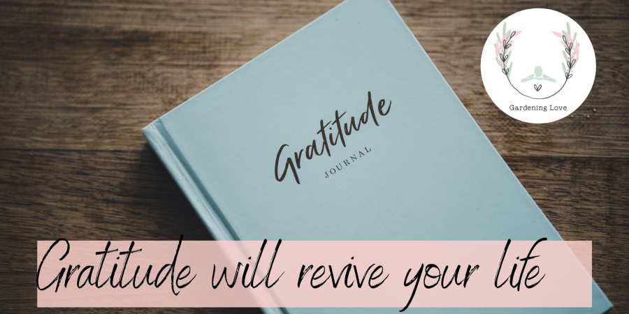Gratitude will revive your life
