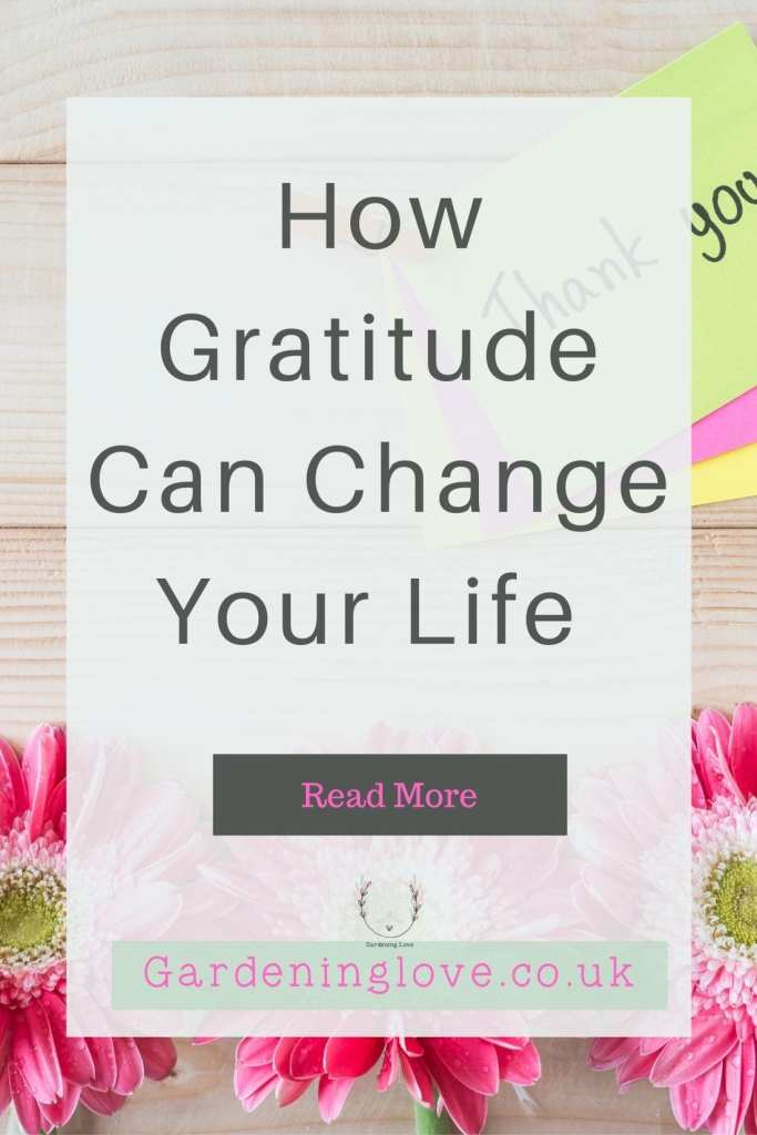 How gratitude can help you to appreciate life. #gratitude #positive #mindset #life #gratitudejournal #gratitudemeditation