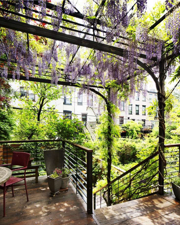Park Slope Garden with Wisteria in Bloom by Kim Hoyt_Gardenista