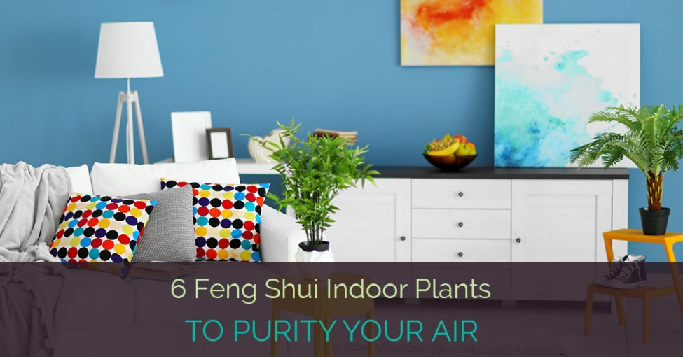feng-shui-indoor-plants