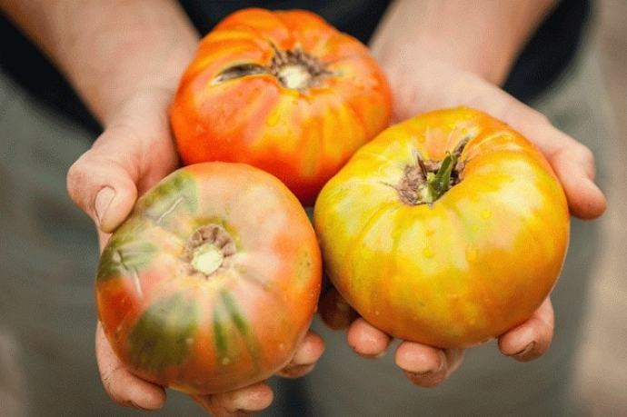 heirloom-tomatoes-4