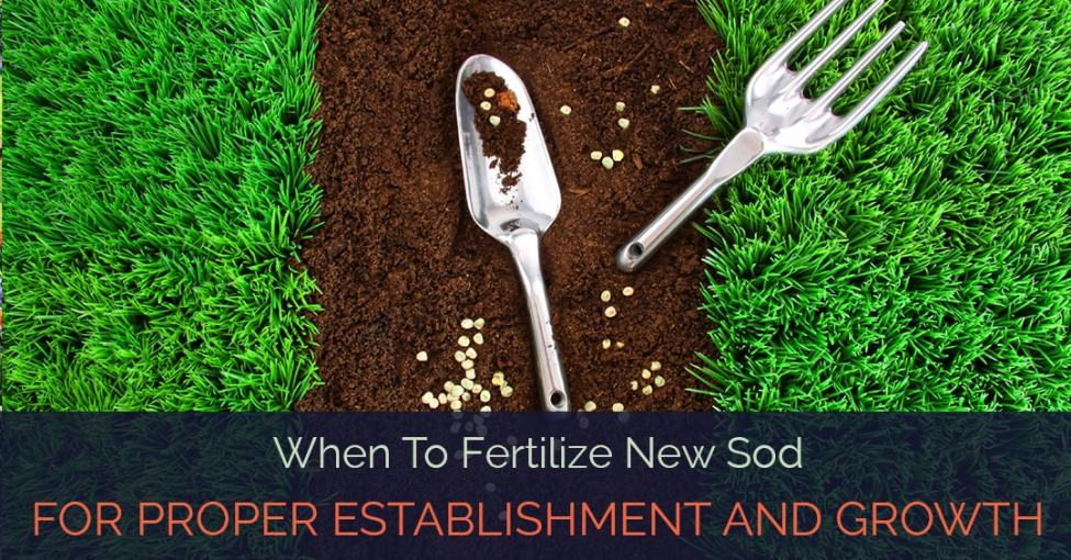 when to fertilize new sod