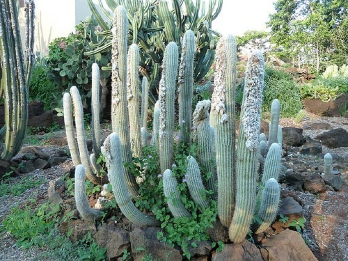 indoor-cactus-types-7