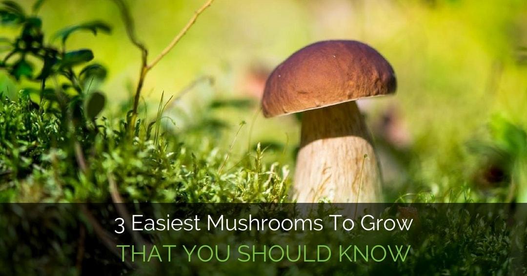Easiest Mushrooms To Grow