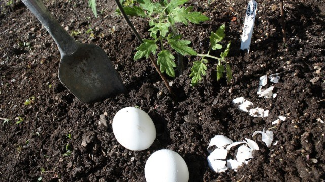 egg-shell-as-a-natural-fertilizer