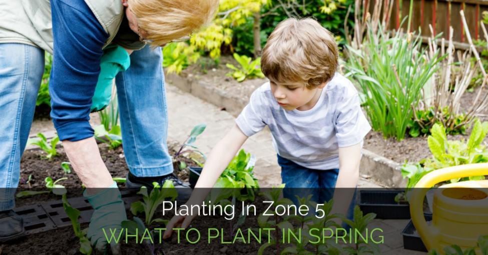 planting-in-zone-5