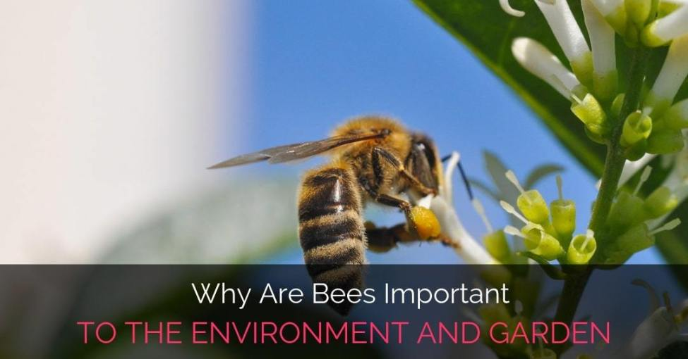 Why Are Bees Important To The Environment And Garden