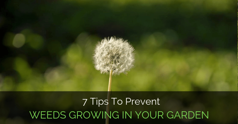 tips-to-prevent-weeds-growing
