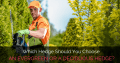 Which Hedge Should You Choose: An Evergreen Or A Deciduous Hedge?