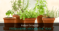 Indoor Growing: Fresh Herbs Around The Year