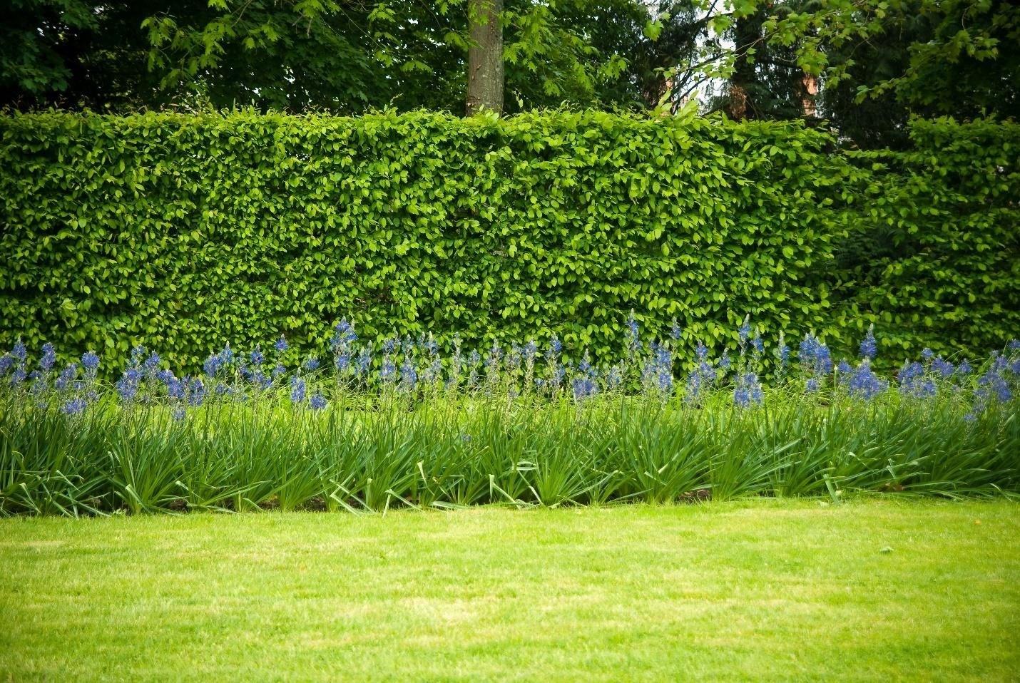 hedge-1