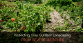 Protecting Your Outdoor Landscaping From Severe Weather