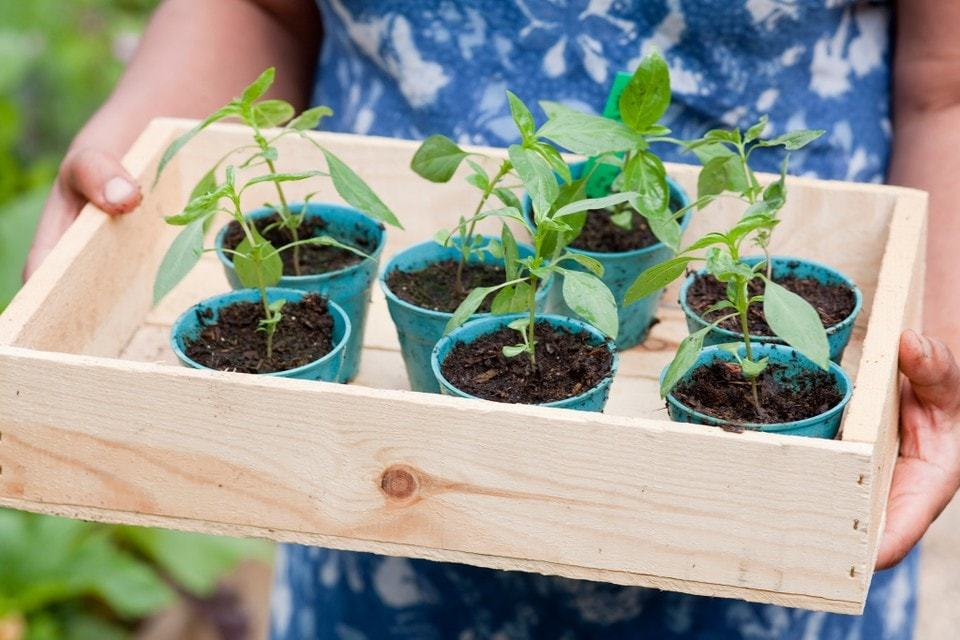 gardening-reduce-plastic
