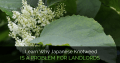 Learn Why Japanese Knotweed is a Problem for Landlords