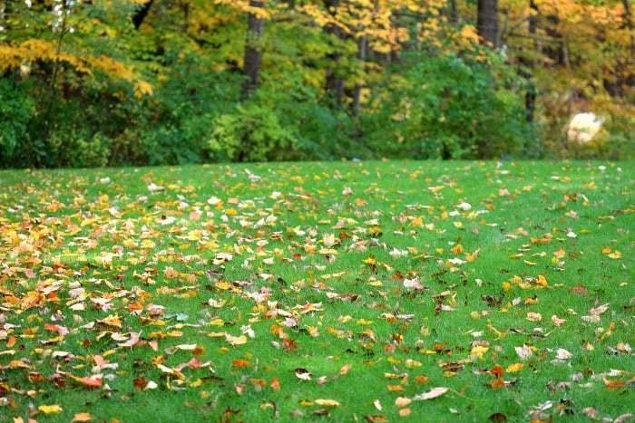 lawn-in-fall