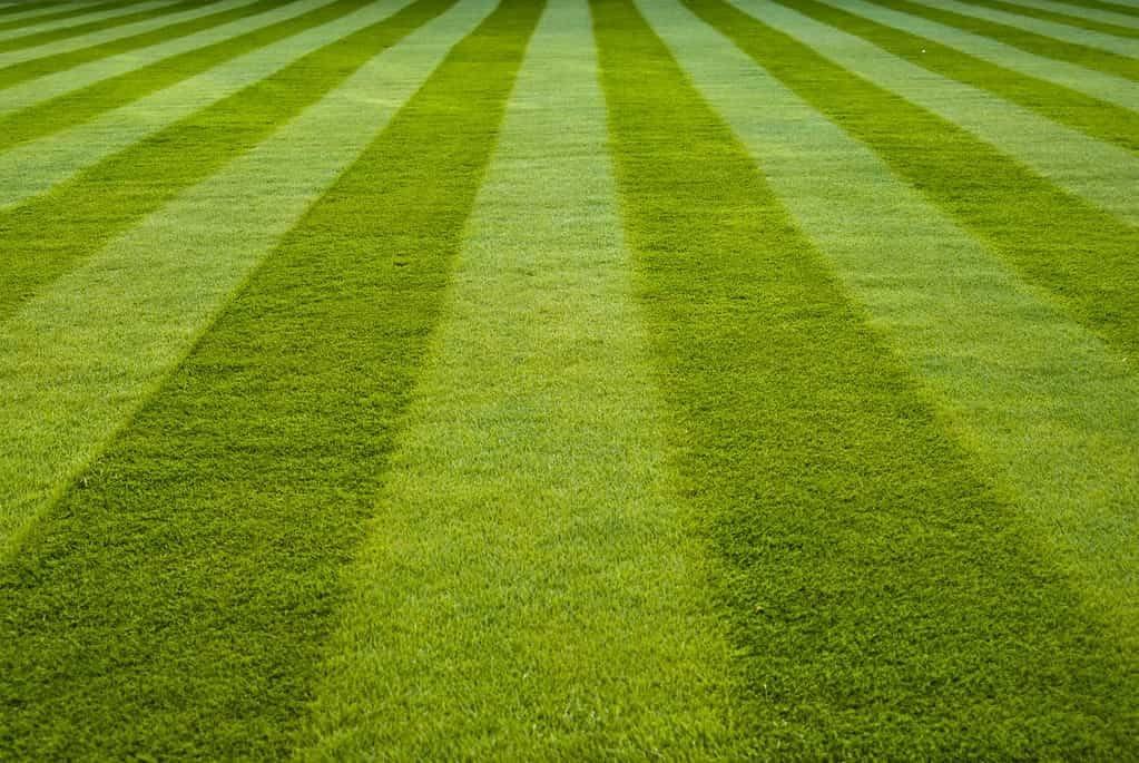 lawn-strips