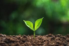 soils-life