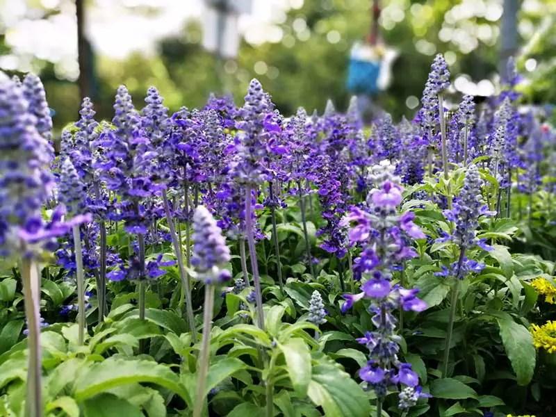 15 Perennials That Grow In Zone 5 Garden Lovers Club