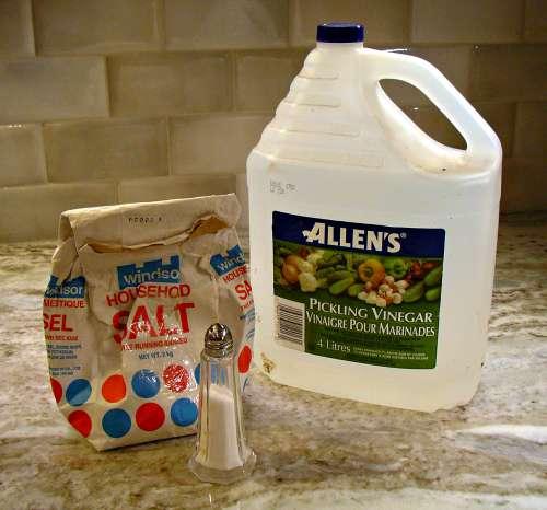 Homemade Weed Killer Roundup Vs Vinegar Vs Salt