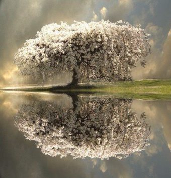 reflection-tree