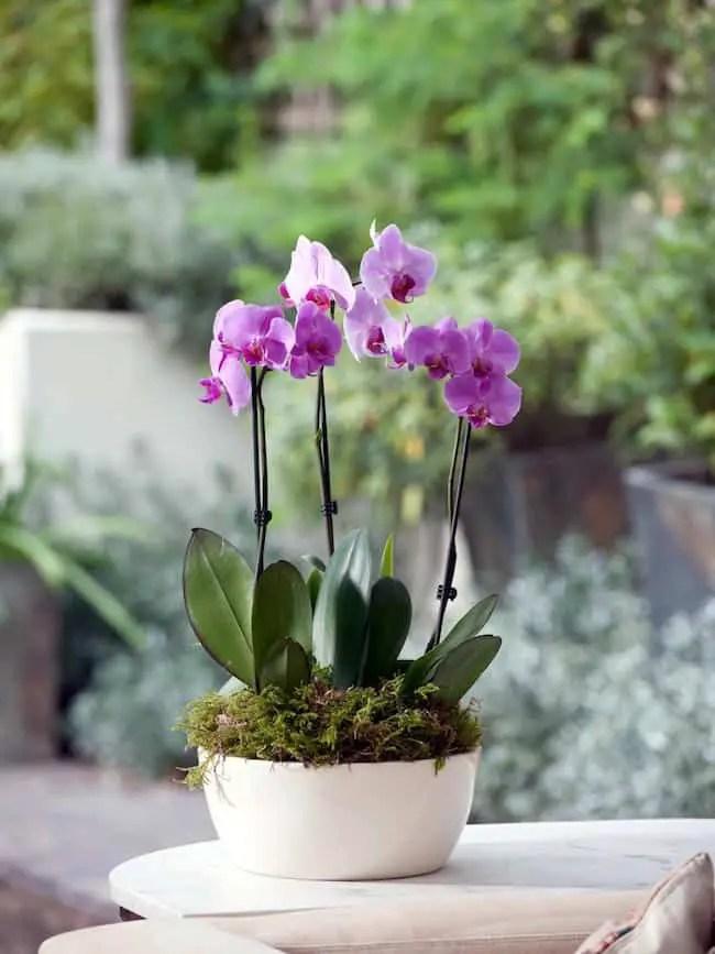 18 Best Low Maintenance Pet Friendly House Plants Gardenoid