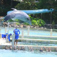 galeria-royal-swim-dolphin-cove-ocho-rios-8