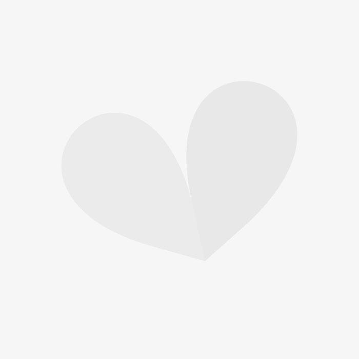 Buy Popular Houseplants Affordable Gardens4you Co Uk
