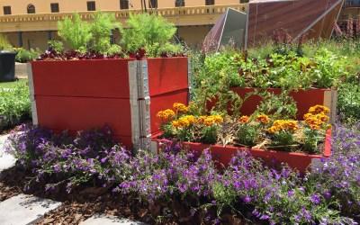Your Summer Veggie Garden