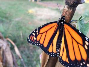 fall-garden-checklist-monarch