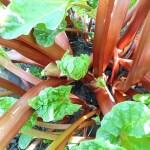 Edible Perennials for Spring
