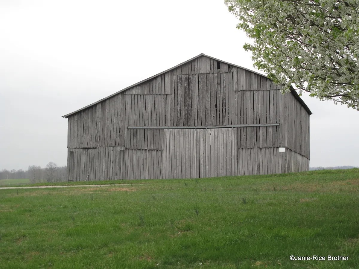 Sentinels Of Memory Kentucky S Tobacco Barns Gardens To