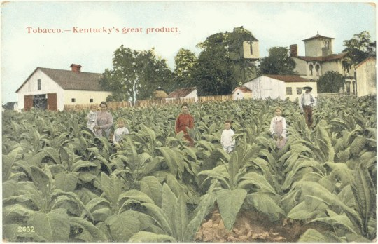 Often romanticized, the cash crop of tobacco changed not only our farmland, but also the layout and streetscape of Lexington.