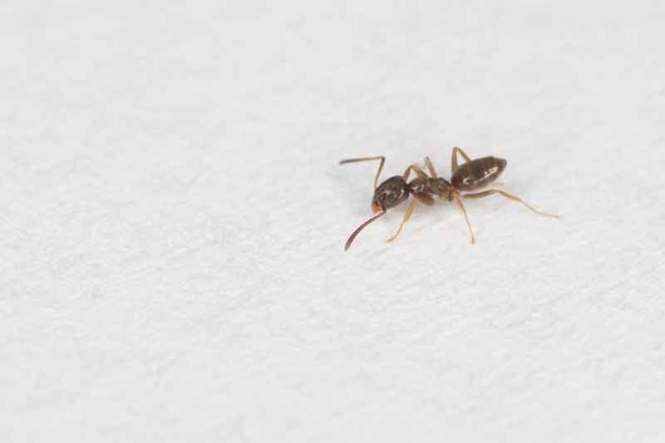 The Methods For Getting Rid Of The Above Ants Are Same However All Garden Safe Granular Topical And They Will Not Enter System