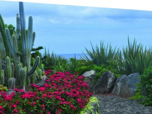 Tuinreis naar Madeira