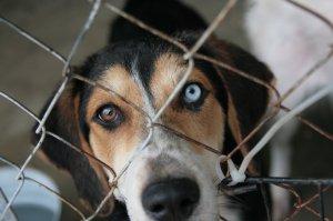 donationpagedog-300x199