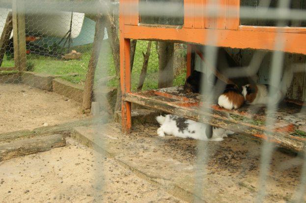 Coelhos e hamsters