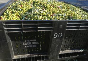 Il colore dell'olio extravergine d'oliva è importante?