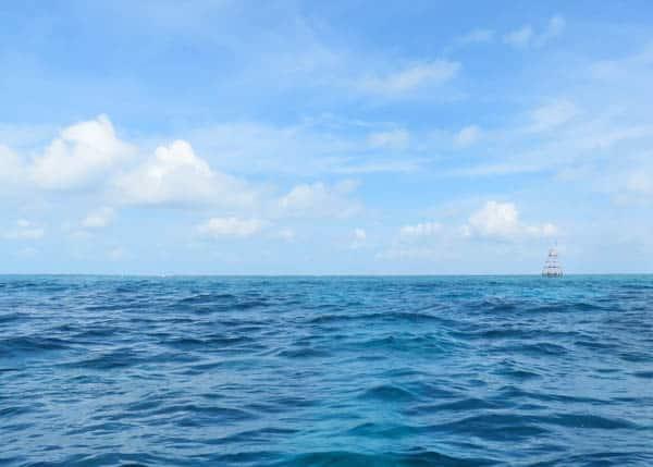 Hogfish Adriatic Hails From Islamorada