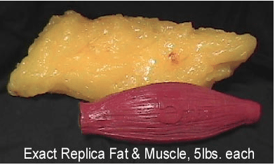 Fat vs muscle density