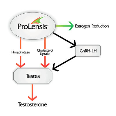 ProLensis can boost your testosterone
