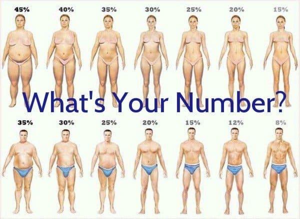 body fat percentages