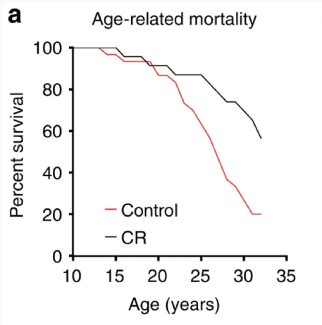 Rhesus monkey's lifespan improved by caloric restriction
