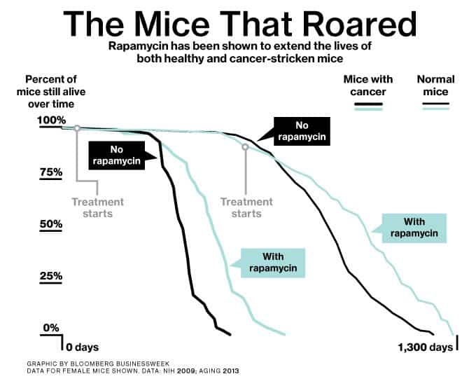 Rapamycin mouse study